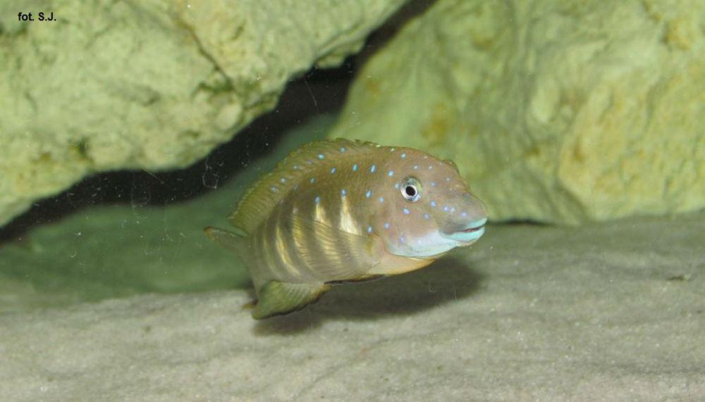 e.c tembwe (2)