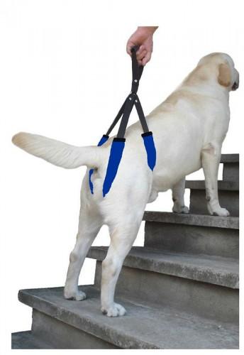 Sprzęt rehabilitacyjny dla zwierząt