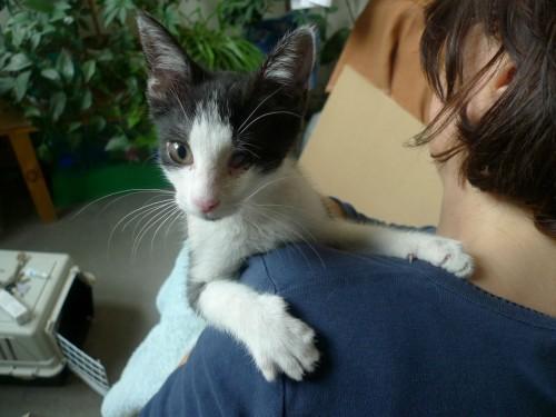 Mały Jack – kotek bez oczka szuka prawdziwego przyjaciela