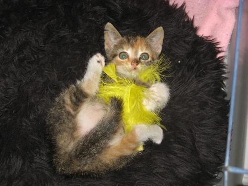 Trzy kolorowa kotka- Bajka szuka domu