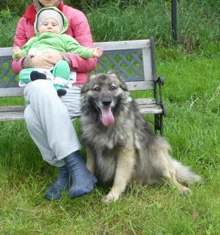 Szejk – spokojny, ułożony przyjaciel, dla całej rodziny