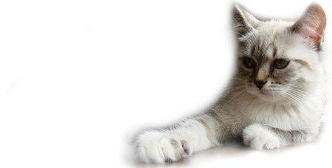 Artykuły Zoologiczne Crazy World Pets