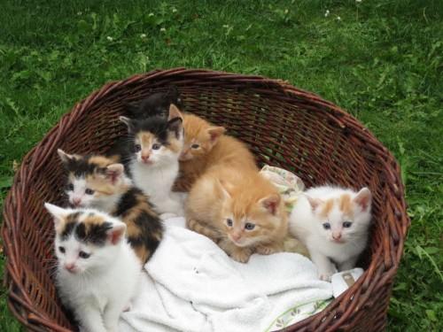 Małe,śliczne kotki szukają domu  :)