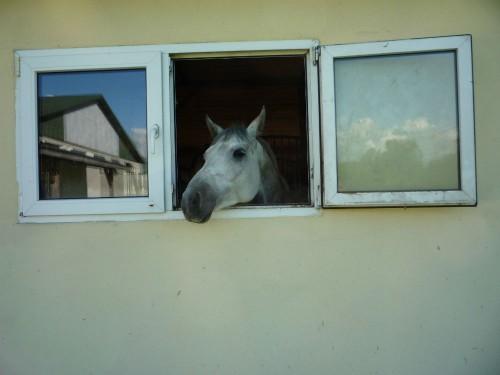 Pensjonat dla koni pod Warszawa