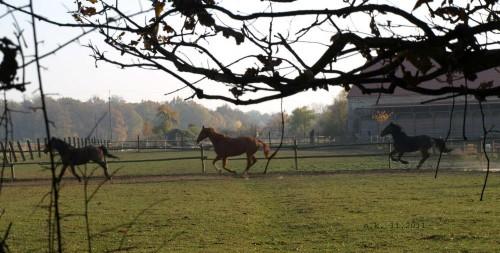 Pensjonat dla koni pod Wrocławiem