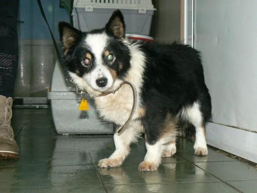 Borysek-starszy psiak ze schroniska pilnie szuka domku!