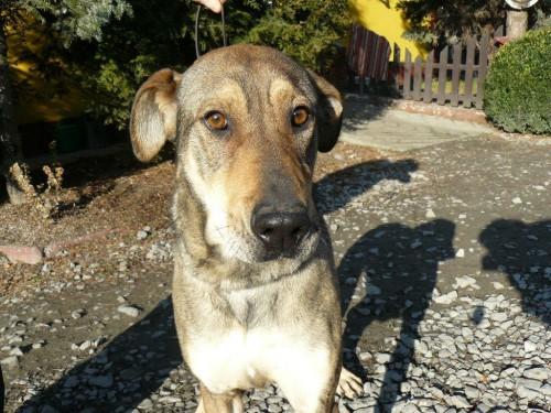 Szanti- psia piękność -znaleziona we wnykach !!!UDOSTĘPNIAJCIE!!!