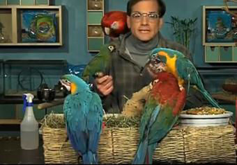 Piękna papuga na sprzedaż