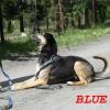 Blue new2