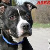 Ares (3)