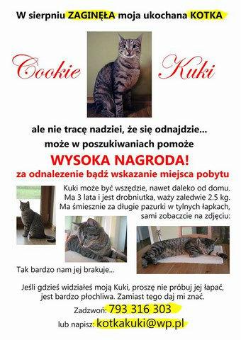 ZAGINĘŁA KOTKA (ok. Warszawy – Modlin , Nowy Dwór Mazowiecki)  UWAGA! Kotka może być wszędzie – mogła zostać przewieziona.