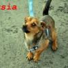 Musia (3)