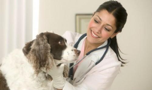 Towary medycyny i weterynarii hurtem