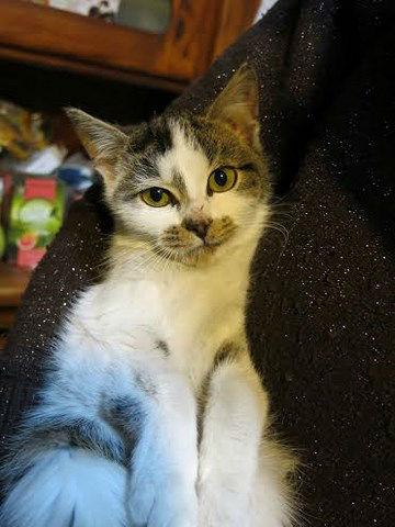 Młody koteczek szuka domu