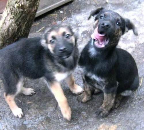 Reni i Alik polecają się do adopcji