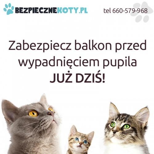Siatka dla kota, kocia siatka, siatki dla kotów, siatka na balkon dla kota – montaż kraków.