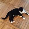 Masz kota rozrabiakę? Vito zostanie jego towarzyszem! - Zdjęcie 2