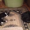 Masz kota rozrabiakę? Vito zostanie jego towarzyszem! - Zdjęcie 3