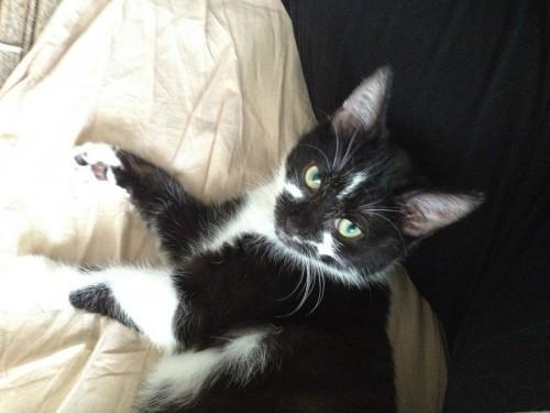 Masz kota rozrabiakę? Vito zostanie jego towarzyszem!