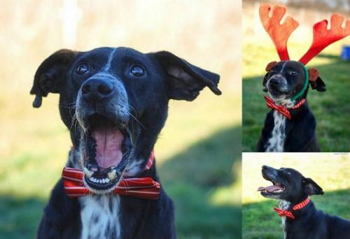 Cudny,radosny,przyjacielski psiak szuka kochającego domu!