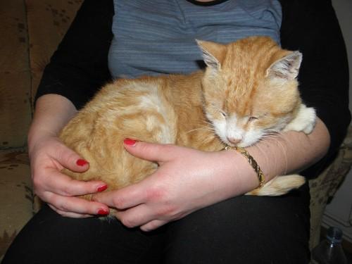 Rudy kotek, ocalony od śmierci na ulicy, szuka domu.