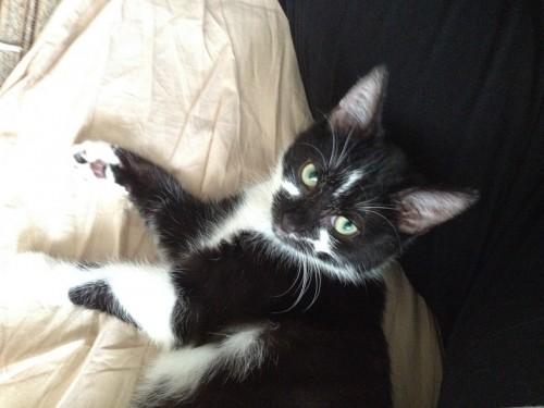 Vito – młody, rozkoszny łobuziak szuka domu!