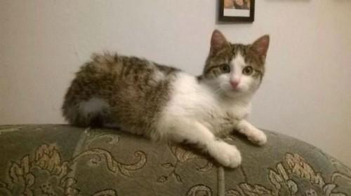 PUSIA- koteczka dla kogoś o wielkim sercu. Adoptuj !