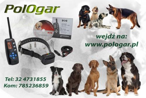 Obroża elektroniczna dla psa